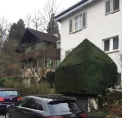 Buxbaum-Monster in Nachbars Garten – Makler zeigen ungern die Nachbarschaft. (Bild: Wilfried Dechau)