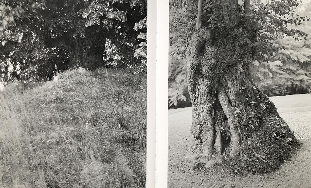 Evessen und Altenböddeken (Bilder: Michael P. Romstoeck